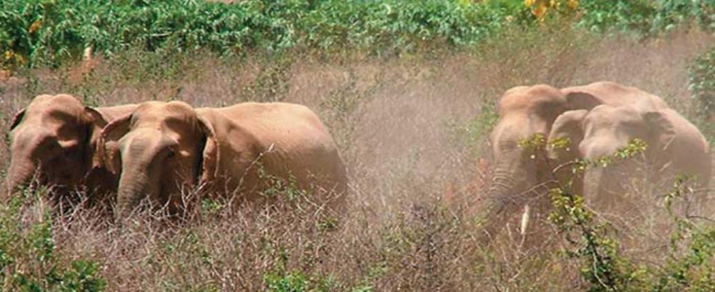 India Wildlife Holidays - Indian Elephants